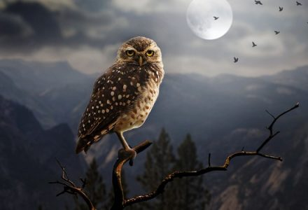 Are You an Owl Trying to Function at Sparrow's?